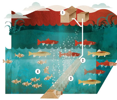 Bio Acoustic Fish Fence May Protect Great Lakes Science